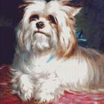 Goblen - Yorkshire Terrier